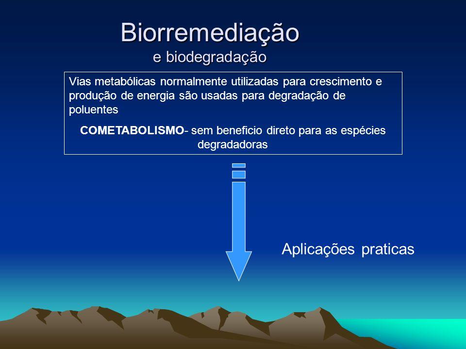 Biorremediação e biodegradação