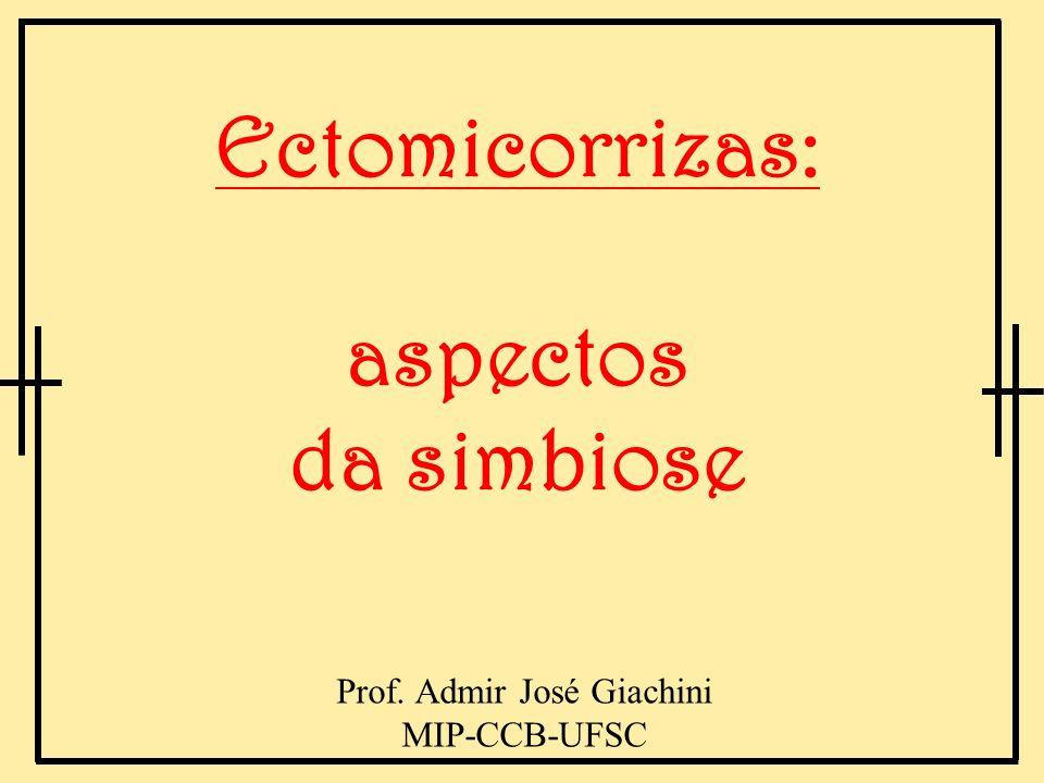 Prof. Admir José Giachini