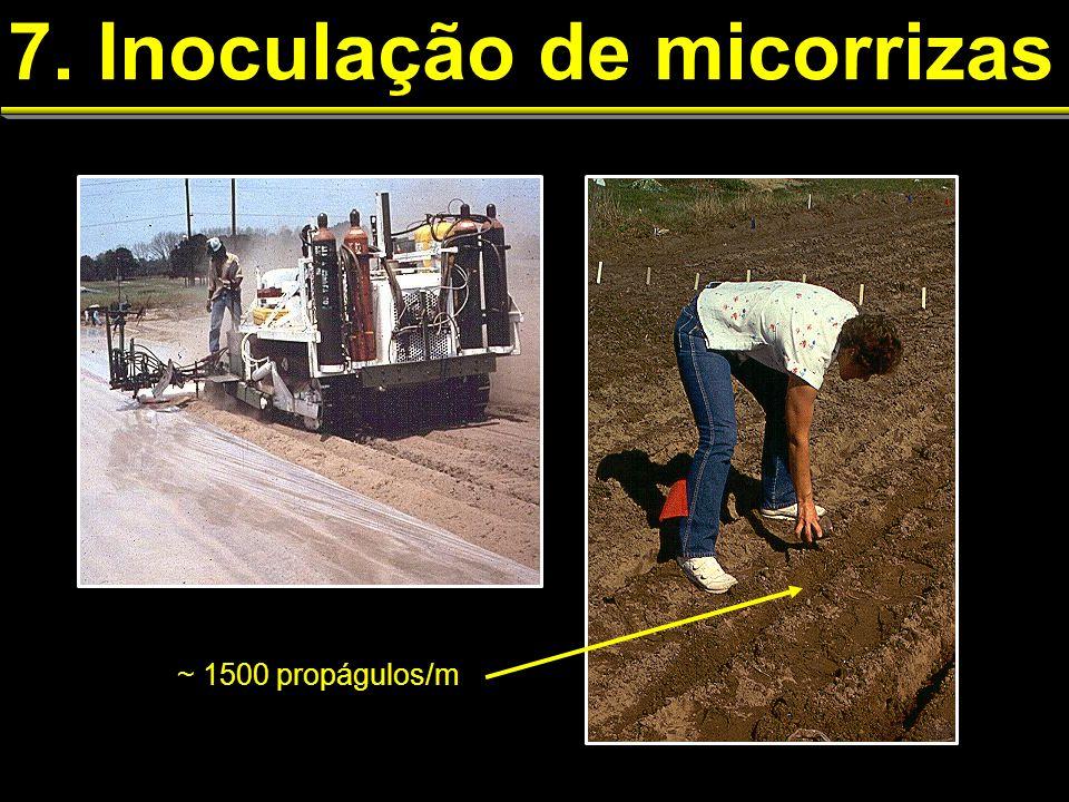 7. Inoculação de micorrizas