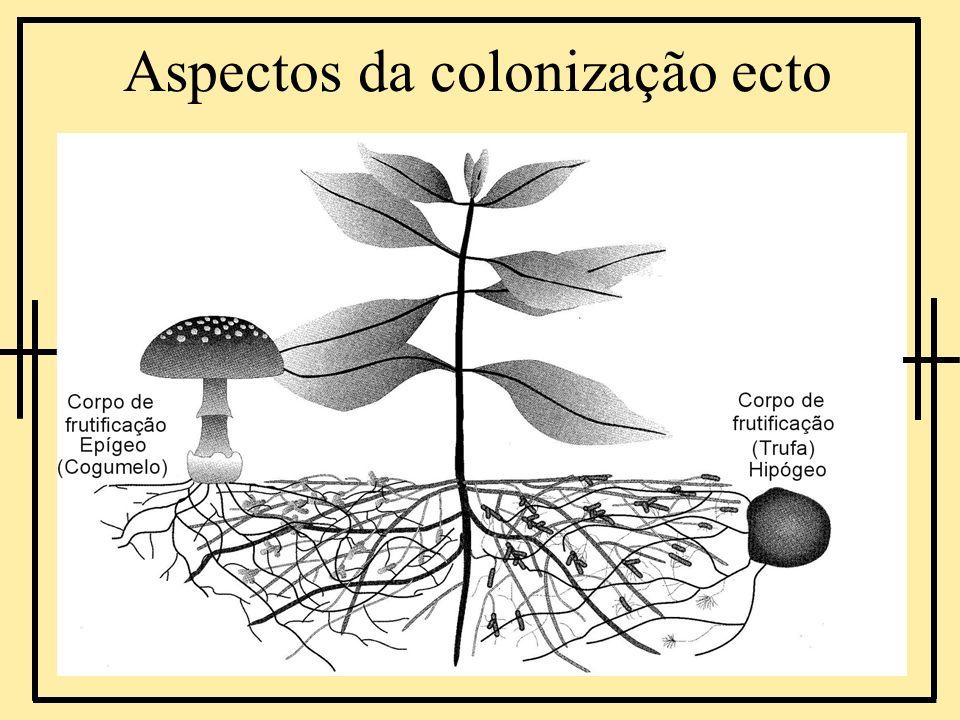 Aspectos da colonização ecto