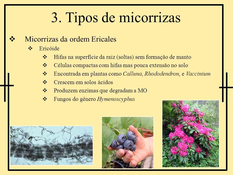 3. Tipos de micorrizas Micorrizas da ordem Ericales Ericóide