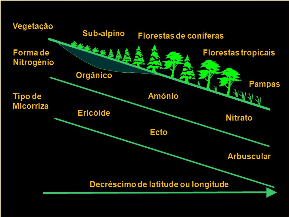 Vegetação Sub-alpino. Florestas de coníferas. Forma de. Nitrogênio. Florestas tropicais. Orgânico.