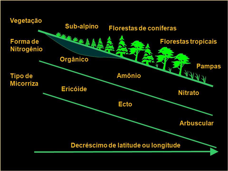 VegetaçãoSub-alpino. Florestas de coníferas. Forma de. Nitrogênio. Florestas tropicais. Orgânico. Pampas.