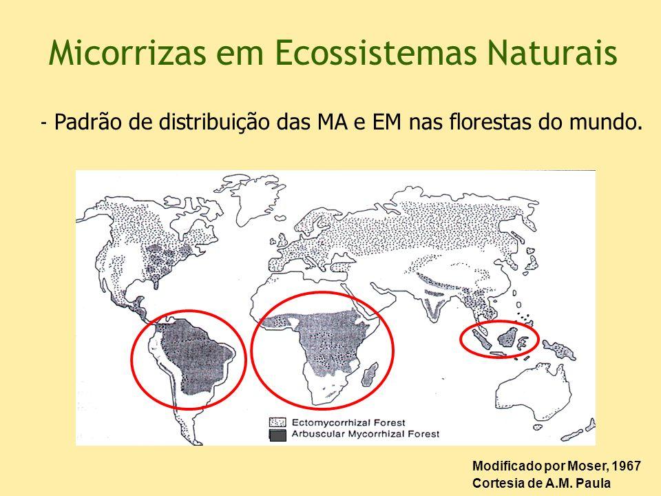 Micorrizas em Ecossistemas Naturais