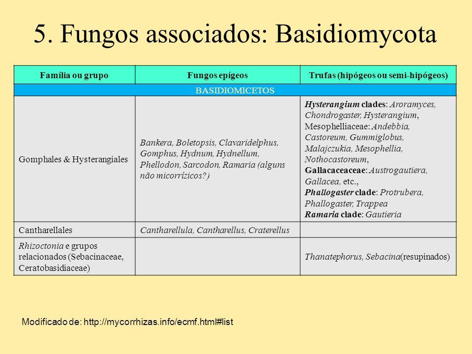 Trufas (hipógeos ou semi-hipógeos)