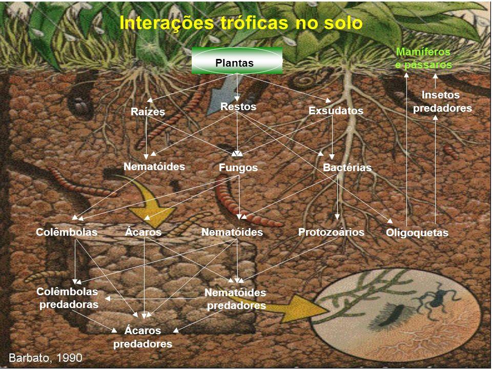 Interações tróficas no solo