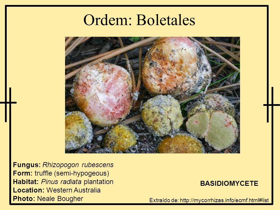 Ordem: Boletales