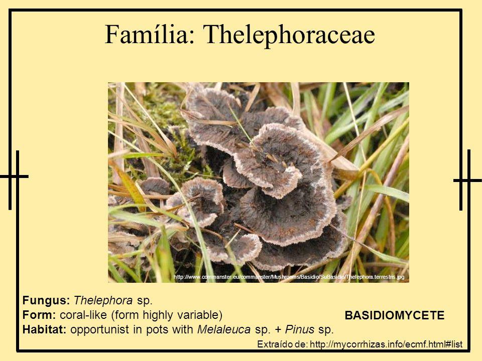 Família: Thelephoraceae