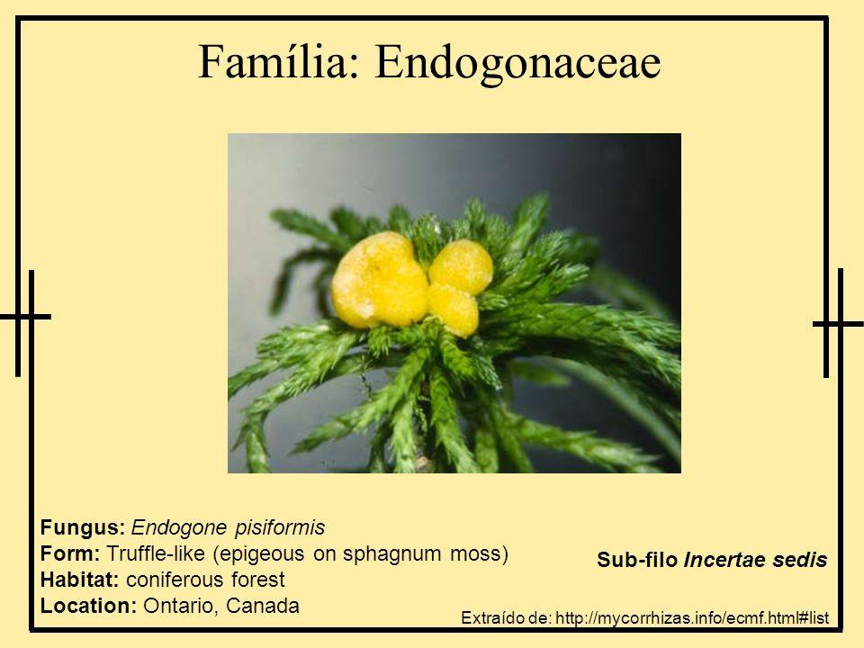 Família: Endogonaceae