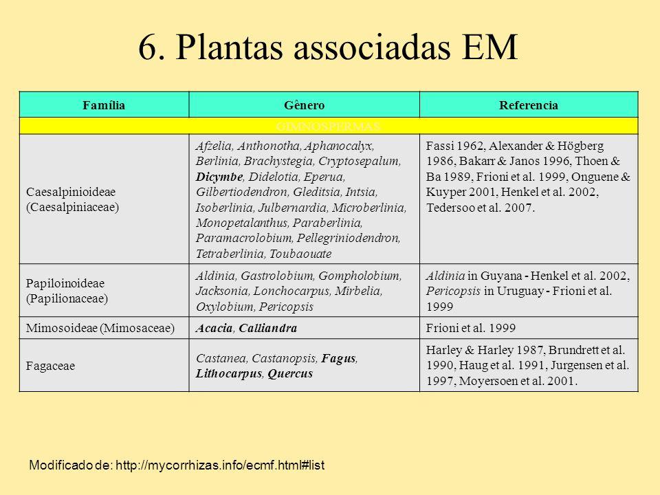 6. Plantas associadas EM Família Gênero Referencia GIMNOSPERMAS
