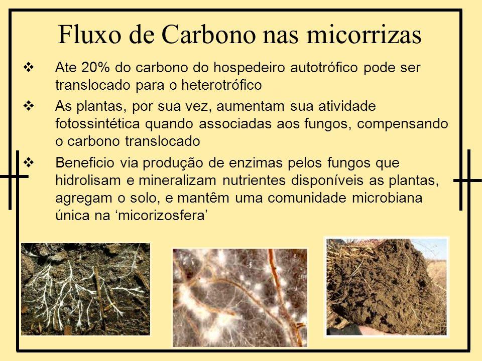 Fluxo de Carbono nas micorrizas