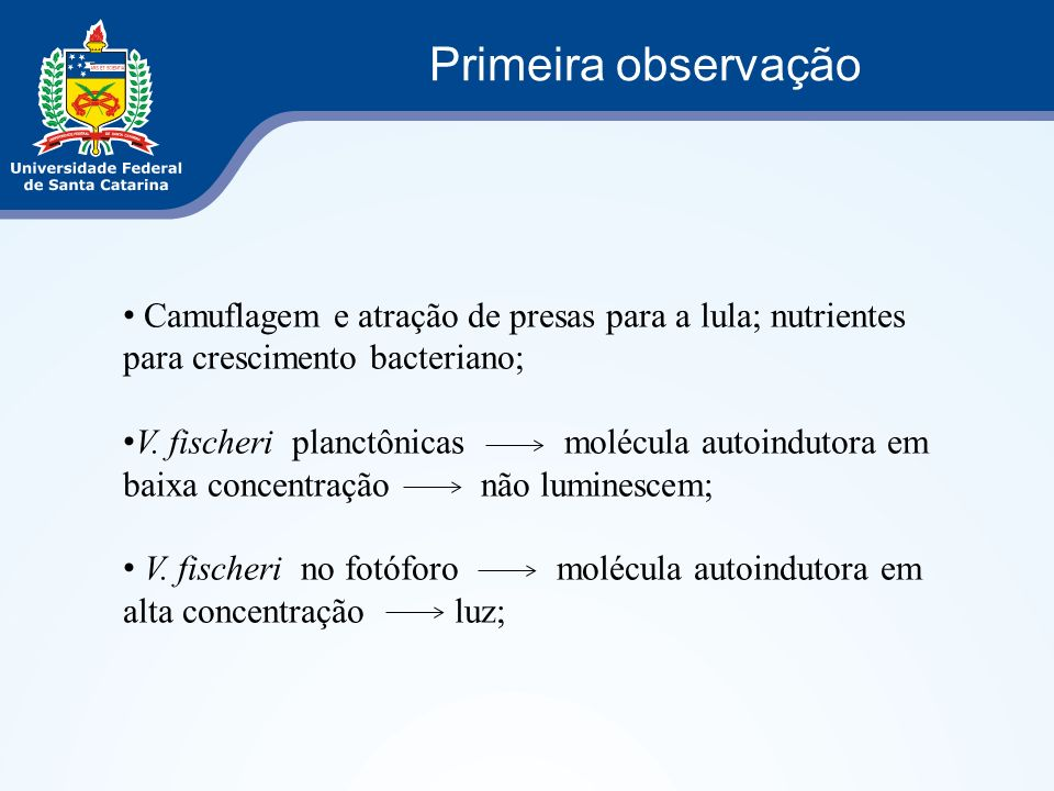 Primeira observação Camuflagem e atração de presas para a lula; nutrientes para crescimento bacteriano;