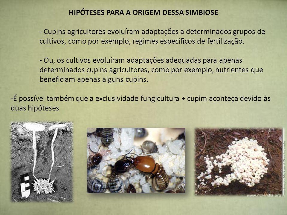 HIPÓTESES PARA A ORIGEM DESSA SIMBIOSE