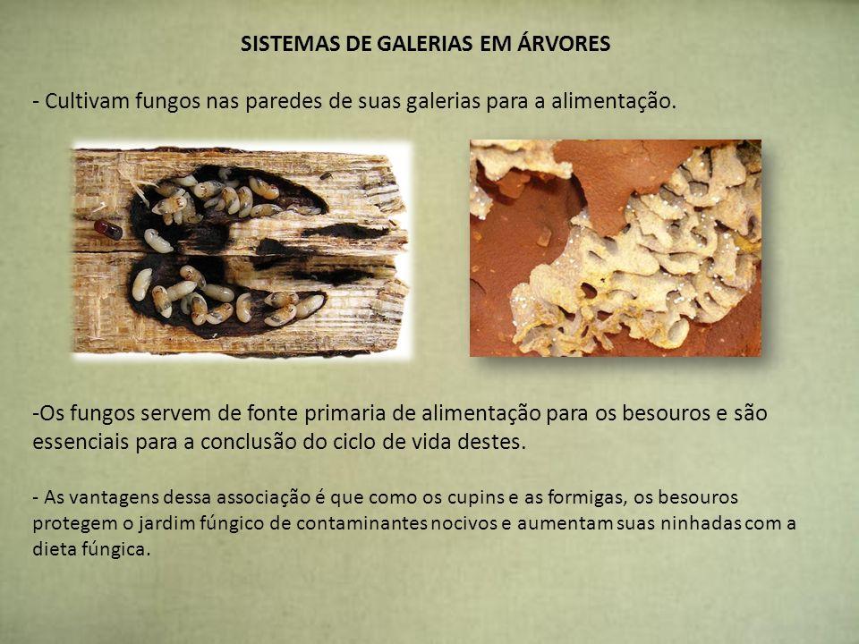 SISTEMAS DE GALERIAS EM ÁRVORES