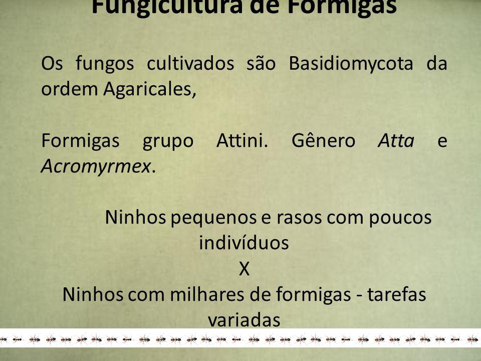 Fungicultura de Formigas