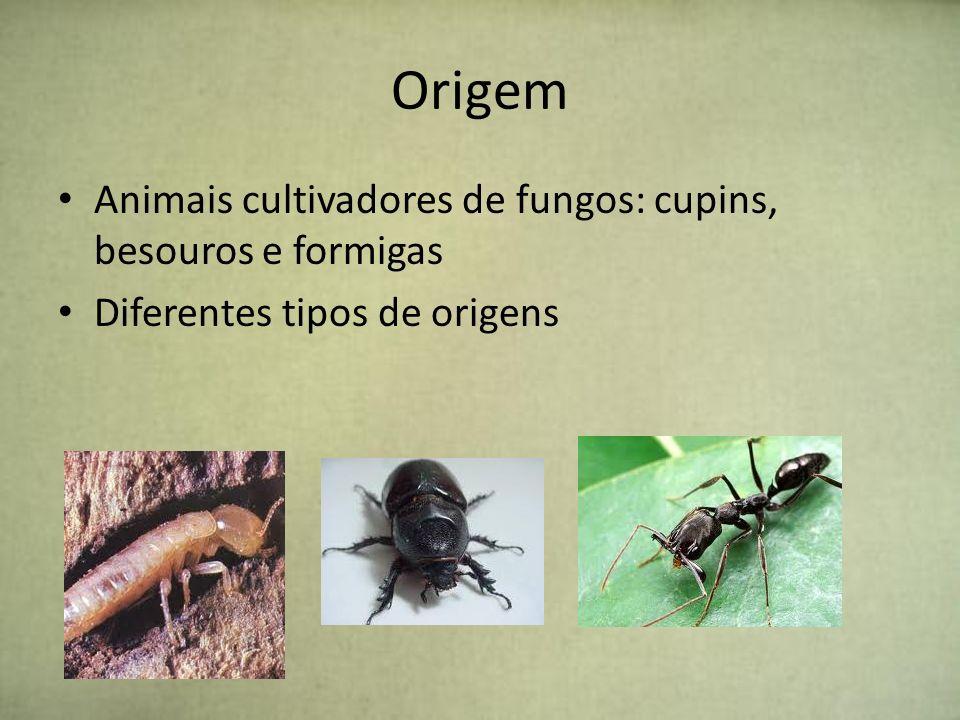 Origem Animais cultivadores de fungos: cupins, besouros e formigas