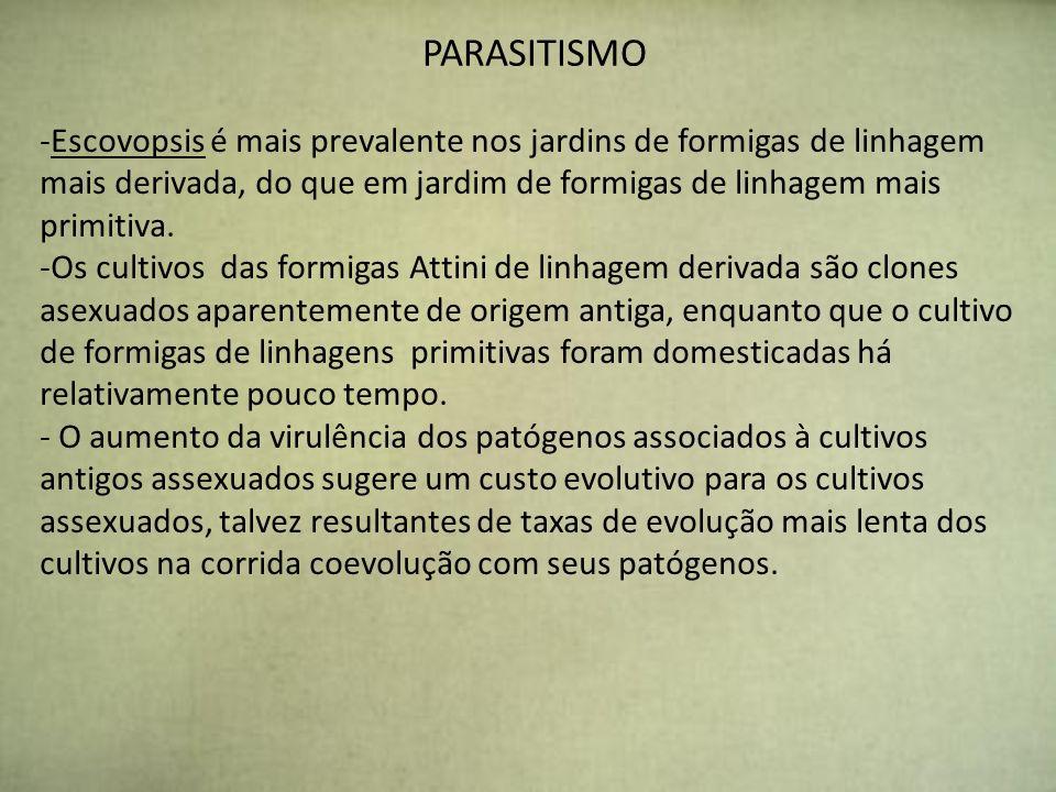 PARASITISMO Escovopsis é mais prevalente nos jardins de formigas de linhagem mais derivada, do que em jardim de formigas de linhagem mais primitiva.