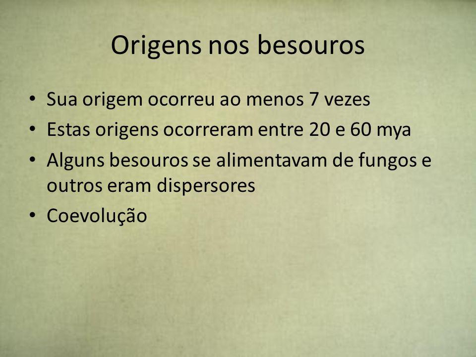 Origens nos besouros Sua origem ocorreu ao menos 7 vezes