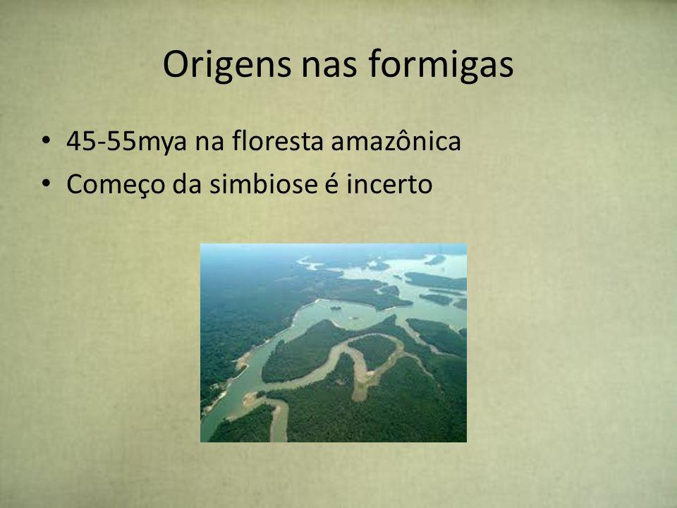 Origens nas formigas 45-55mya na floresta amazônica