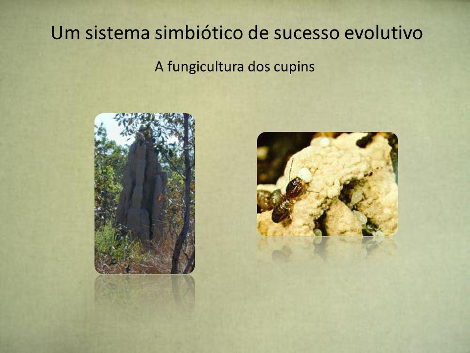 Um sistema simbiótico de sucesso evolutivo