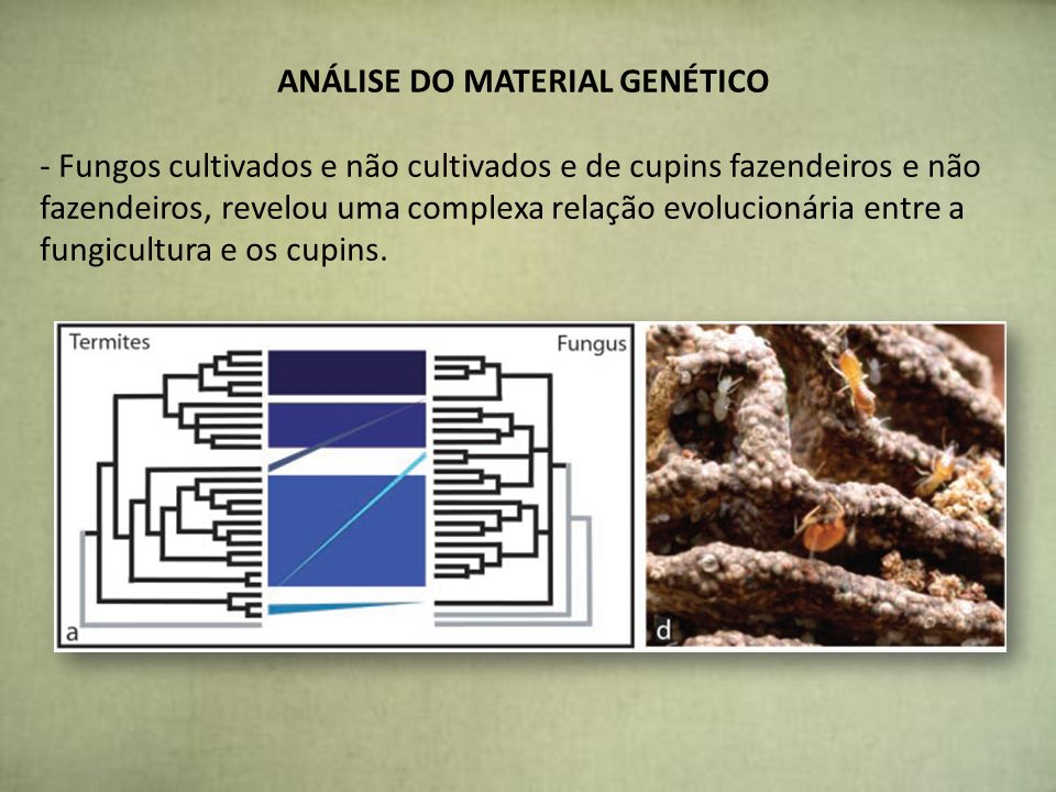 ANÁLISE DO MATERIAL GENÉTICO
