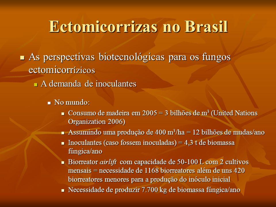 Ectomicorrizas no Brasil