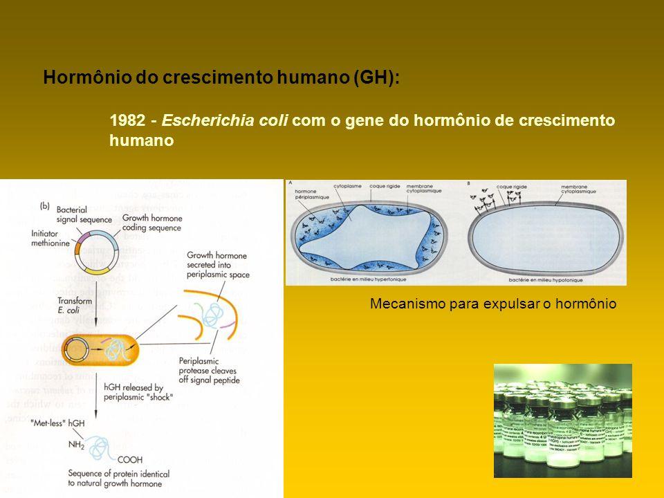 Hormônio do crescimento humano (GH):