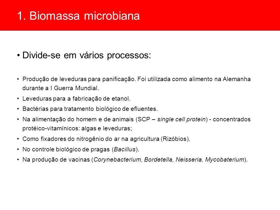 1. Biomassa microbiana Divide-se em vários processos: