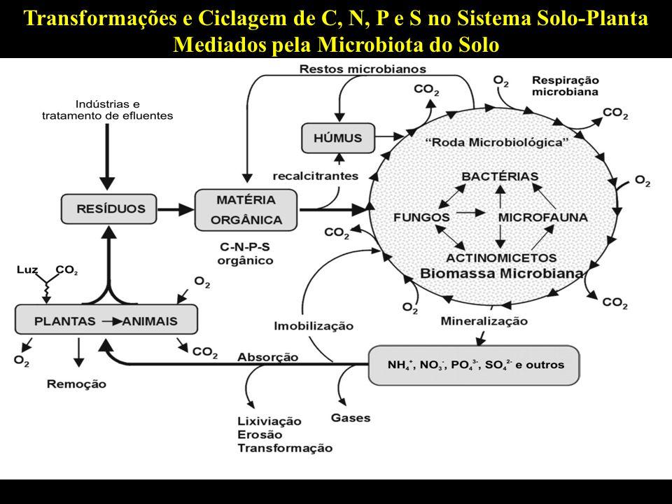Transformações e Ciclagem de C, N, P e S no Sistema Solo-Planta Mediados pela Microbiota do Solo