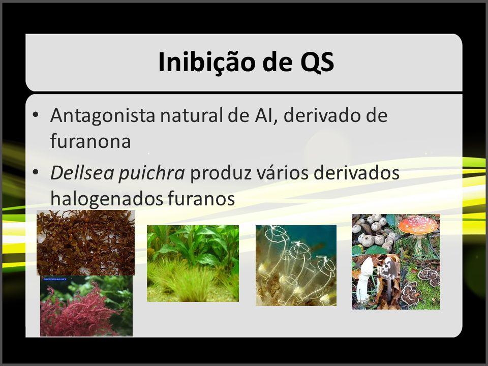 Inibição de QS Antagonista natural de AI, derivado de furanona