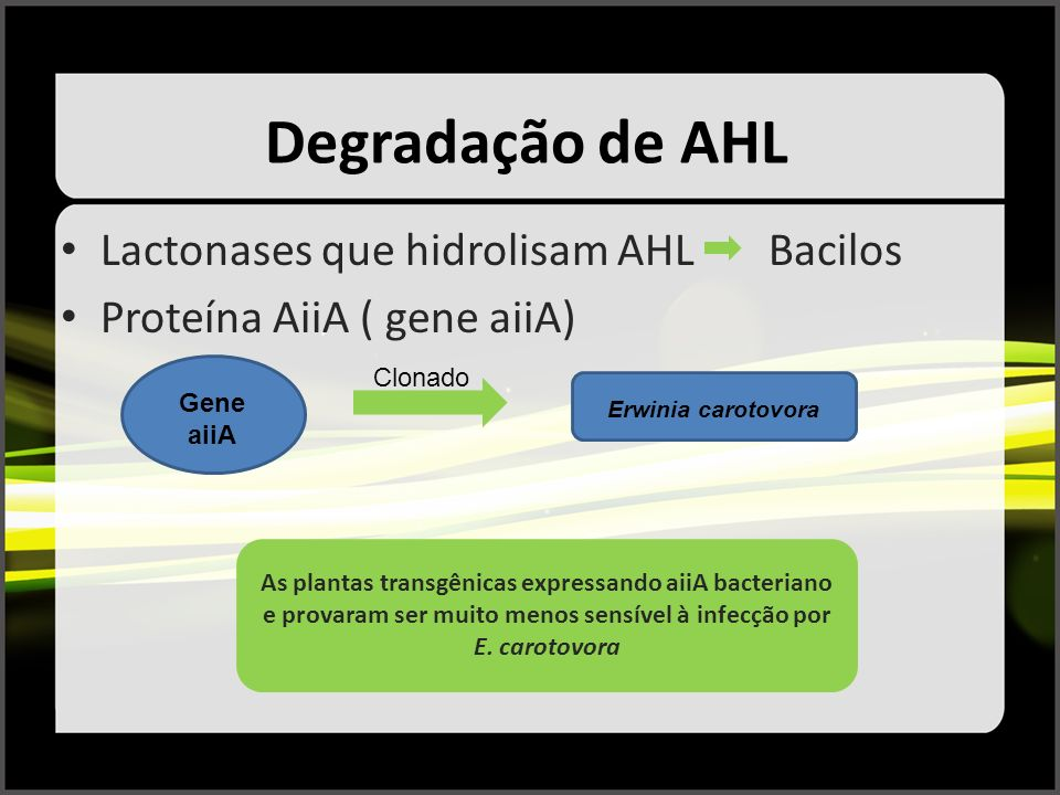 Degradação de AHL Lactonases que hidrolisam AHL Bacilos