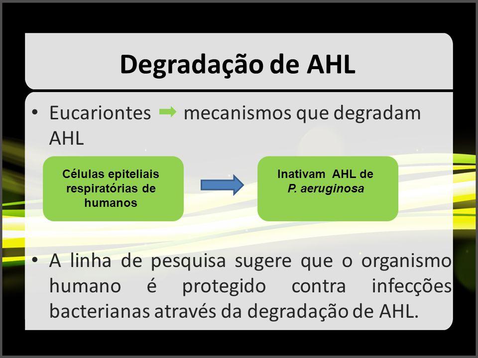 Degradação de AHL Eucariontes mecanismos que degradam AHL