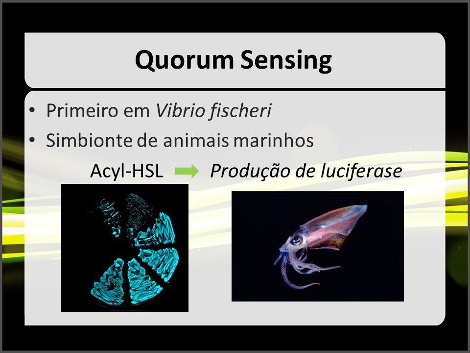 Quorum Sensing Primeiro em Vibrio fischeri