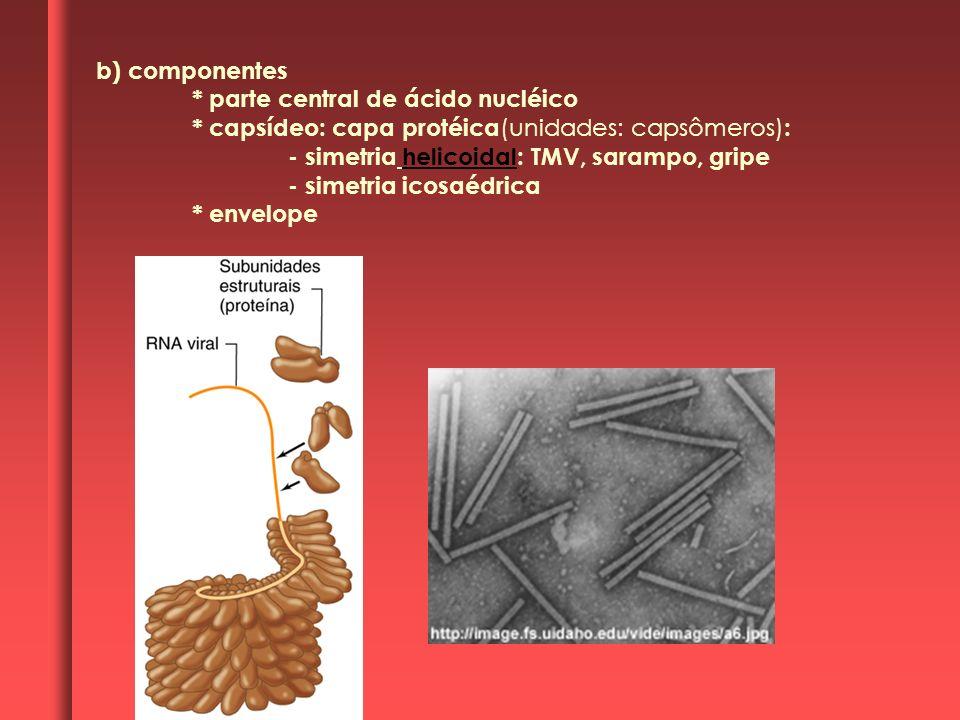 b) componentes* parte central de ácido nucléico. * capsídeo: capa protéica(unidades: capsômeros): - simetria helicoidal: TMV, sarampo, gripe.