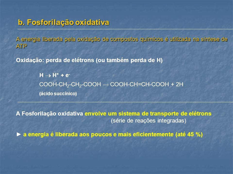 b. Fosforilação oxidativa