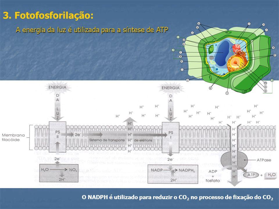 O NADPH é utilizado para reduzir o CO2 no processo de fixação do CO2