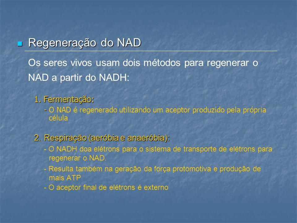Regeneração do NAD Os seres vivos usam dois métodos para regenerar o NAD a partir do NADH: 1. Fermentação: