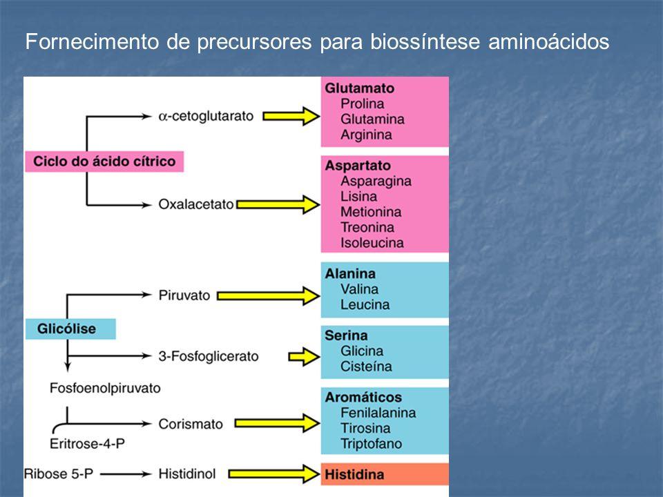 Fornecimento de precursores para biossíntese aminoácidos