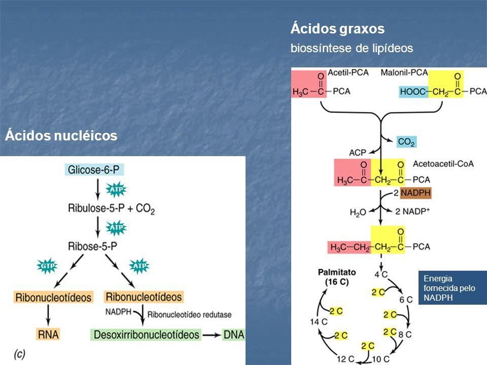 Ácidos graxos Ácidos nucléicos biossíntese de lipídeos