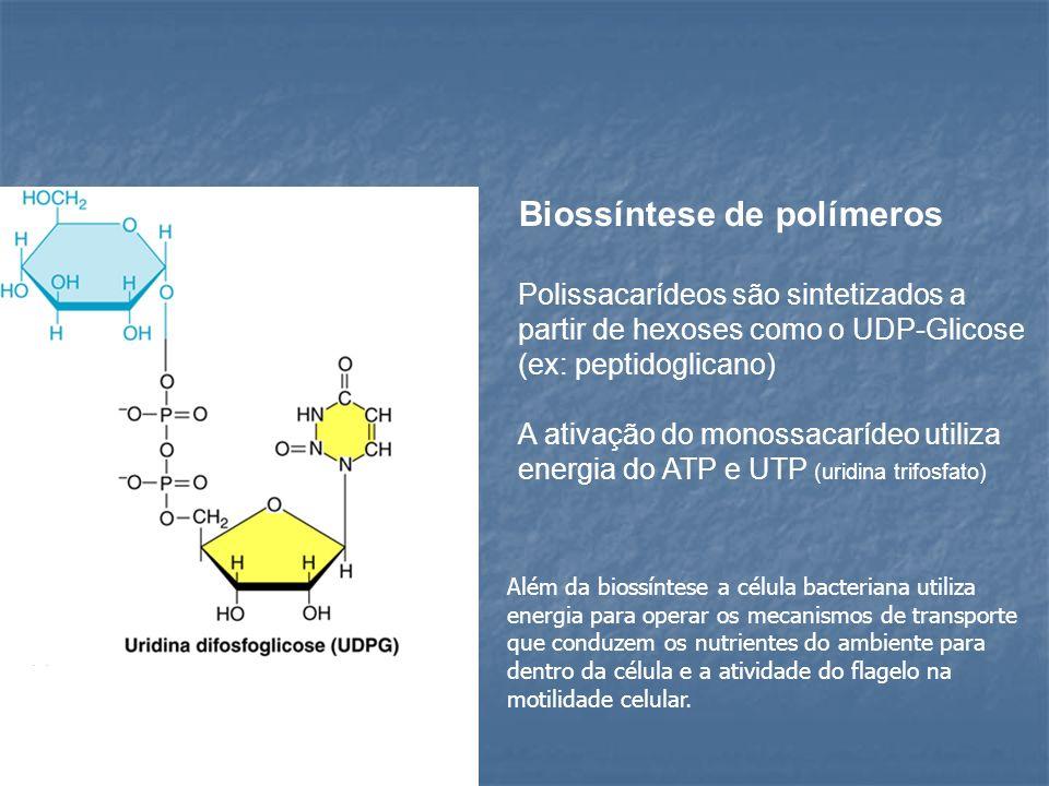 Biossíntese de polímeros