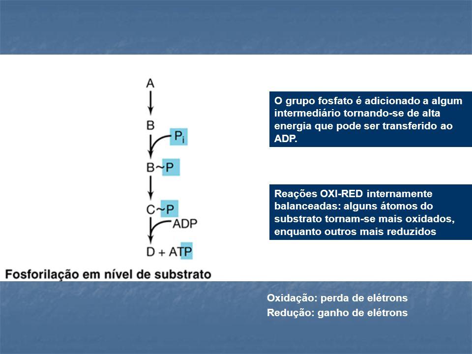O grupo fosfato é adicionado a algum intermediário tornando-se de alta energia que pode ser transferido ao ADP.