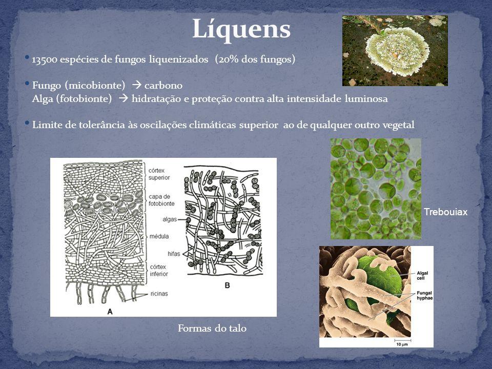 Líquens 13500 espécies de fungos liquenizados (20% dos fungos)