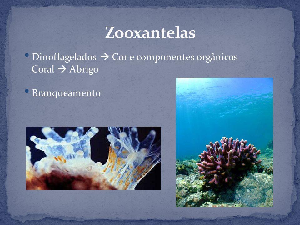 Zooxantelas Dinoflagelados  Cor e componentes orgânicos