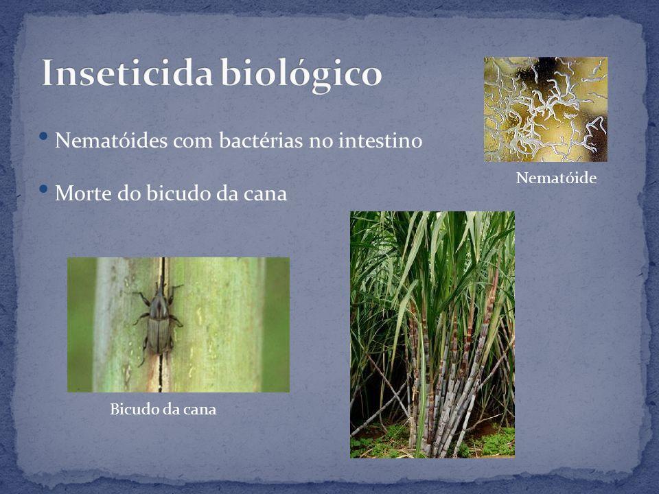 Inseticida biológico Nematóides com bactérias no intestino