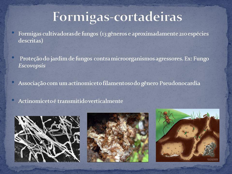 Formigas-cortadeiras