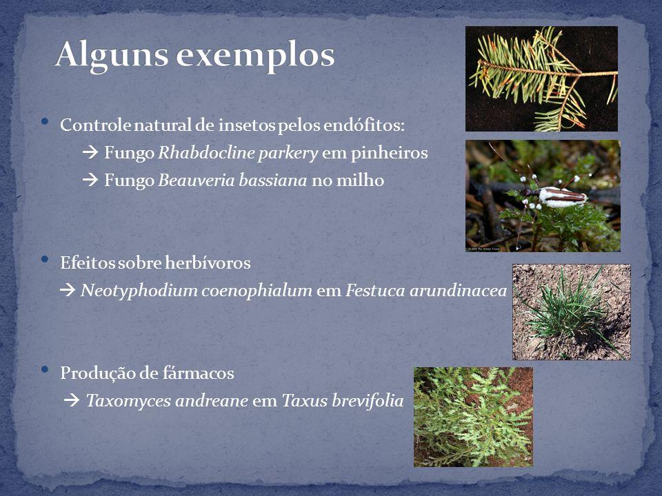 Alguns exemplos Controle natural de insetos pelos endófitos: