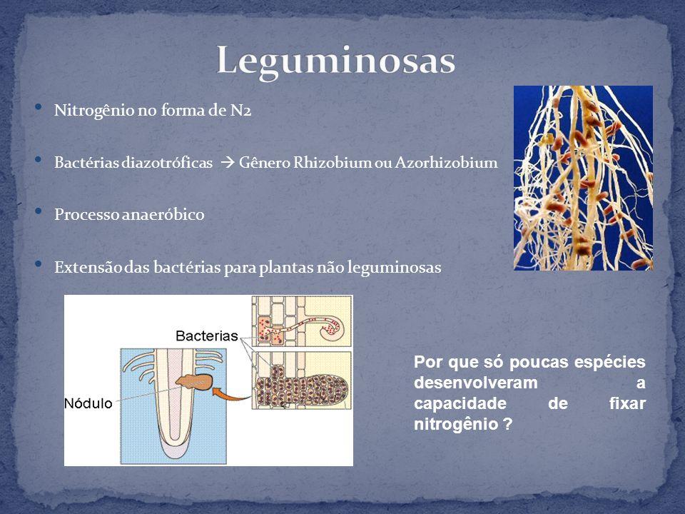 Leguminosas Nitrogênio no forma de N2 Processo anaeróbico
