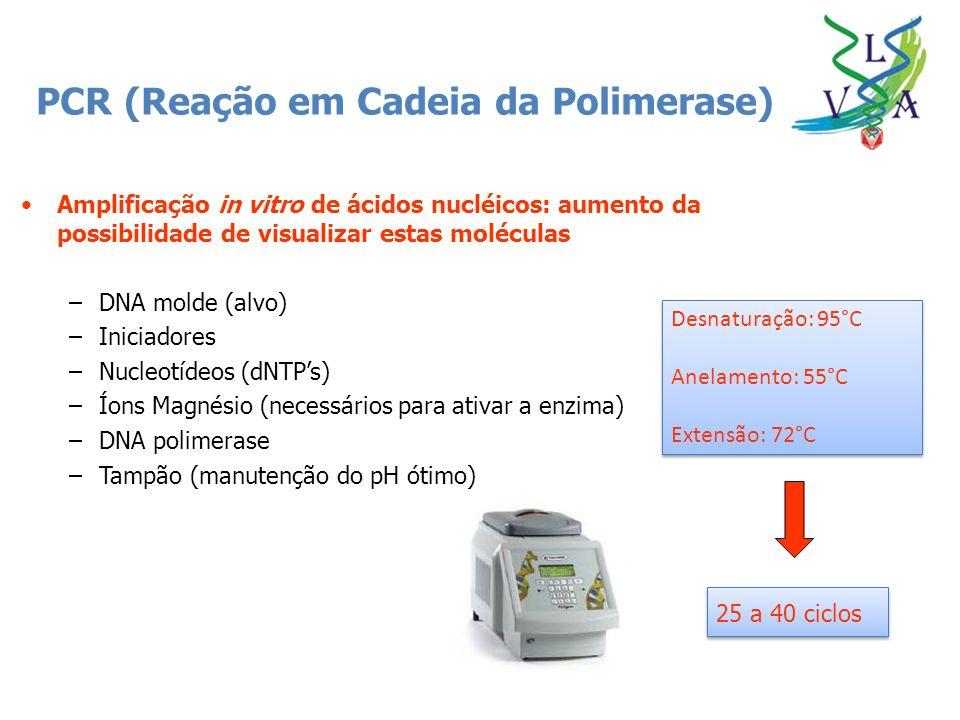 PCR (Reação em Cadeia da Polimerase)