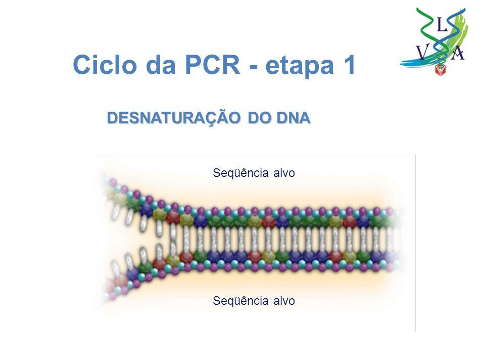 Ciclo da PCR - etapa 1 DESNATURAÇÃO DO DNA Seqüência alvo