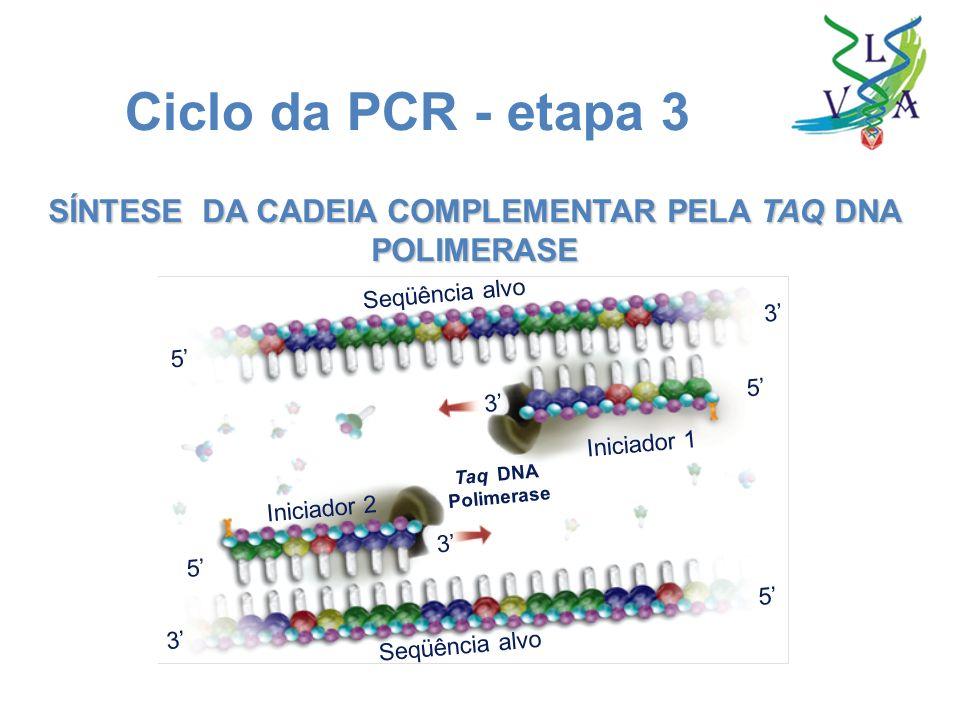 SÍNTESE DA CADEIA COMPLEMENTAR PELA TAQ DNA POLIMERASE